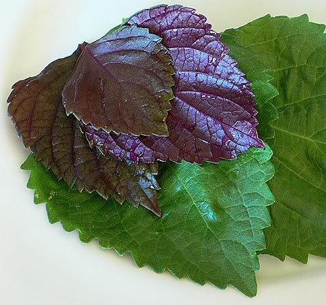 Loại bỏ hoàn toàn mụn thịt với những thảo dược quý trong vườn nhà1