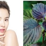 2 cách chữa trị mụn thịt quanh mắt bằng lá tía tô hiệu quả chỉ sau 5 phút